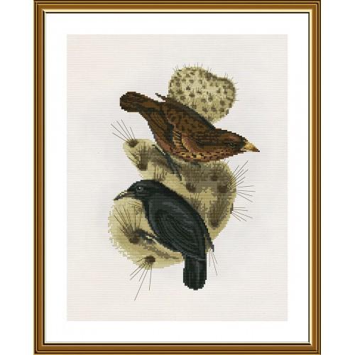"""Набор для вышивки нитками на канве с фоновым изображением """"Галапагосские вьюрки"""""""