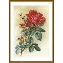 """Набор для вышивки нитками на канве с фоновым изображением """"Роза красная"""""""